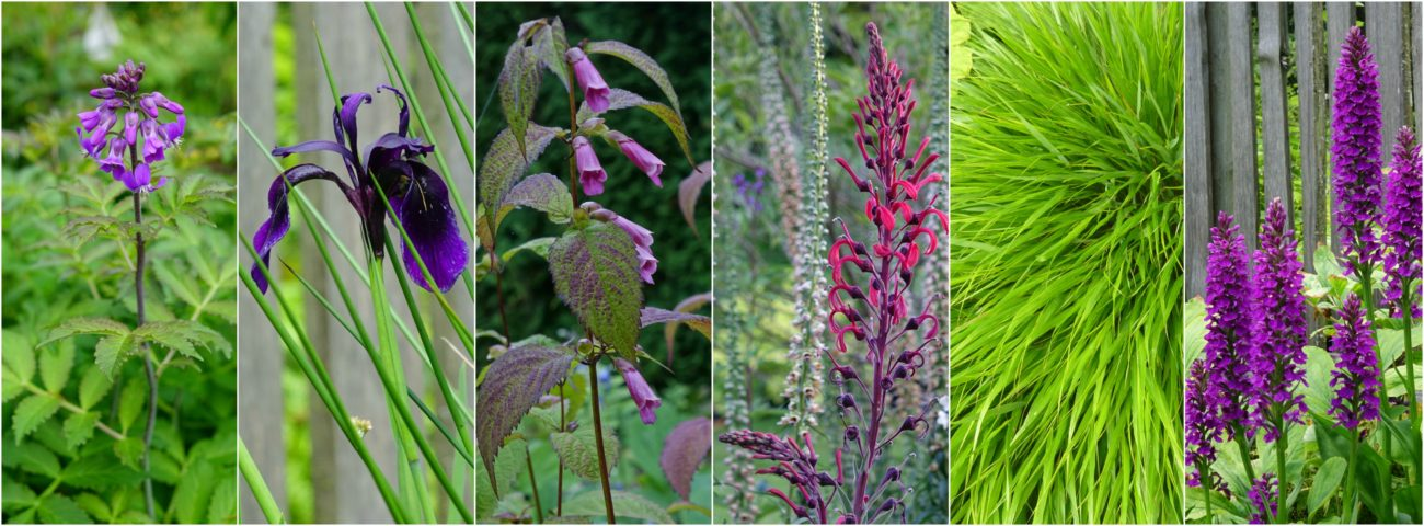Unusual hardy perennials and woodland plants at Free Spirit Nursery, Langley, BC, Canada